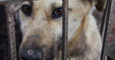 CABA: Existen múltiples canales para denunciar maltrato animal